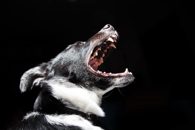 איך לגרום לכלב להפסיק לנבוח כל הזמן