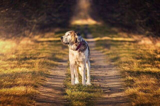 5 חוקי יסוד שחייבים להכיר בכלבים