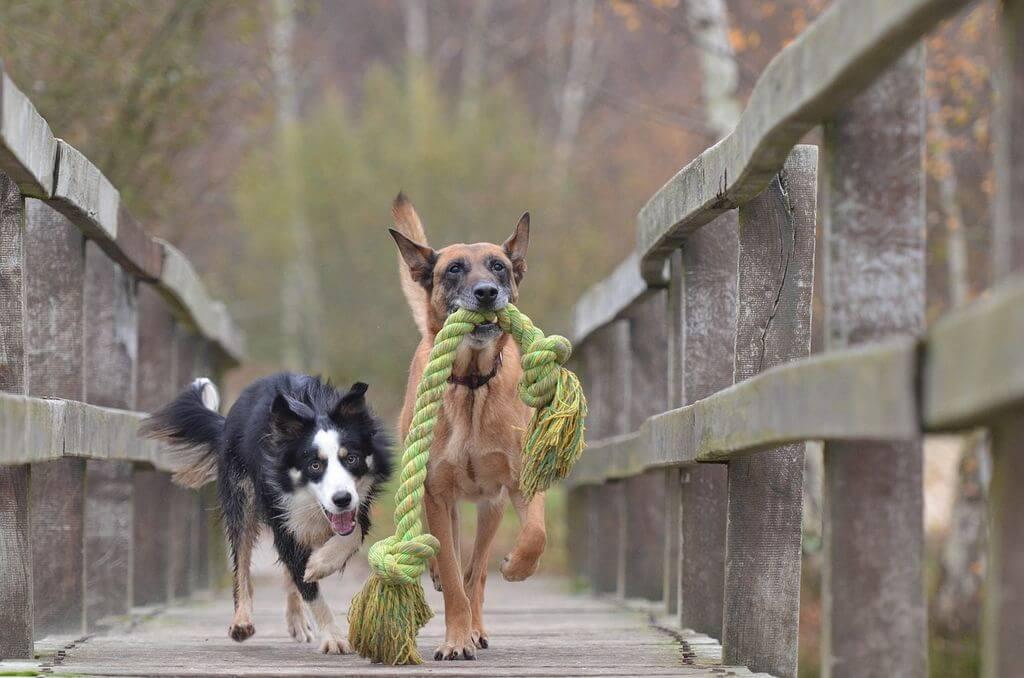אימוץ או קניית כלב? כך תבחרו כלב מתאים למשפחה