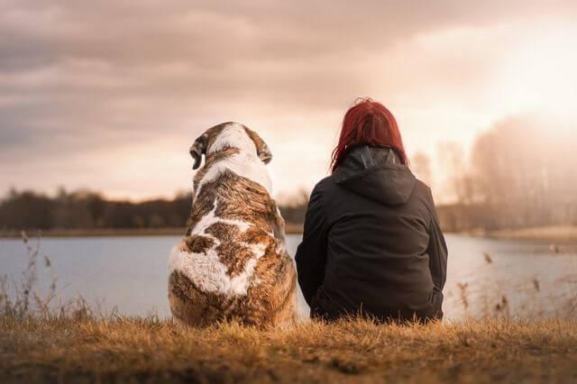 10 דברים שלא ידעתם על הכלב שלכם