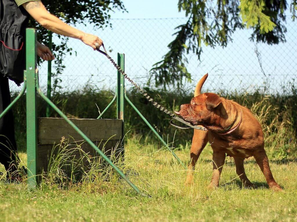 טיפים מעולים לאילוף כלבים מוצלח – כך תעשו את זה נכון!