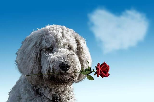 איך לאמץ כלב ולא להצטער על כך