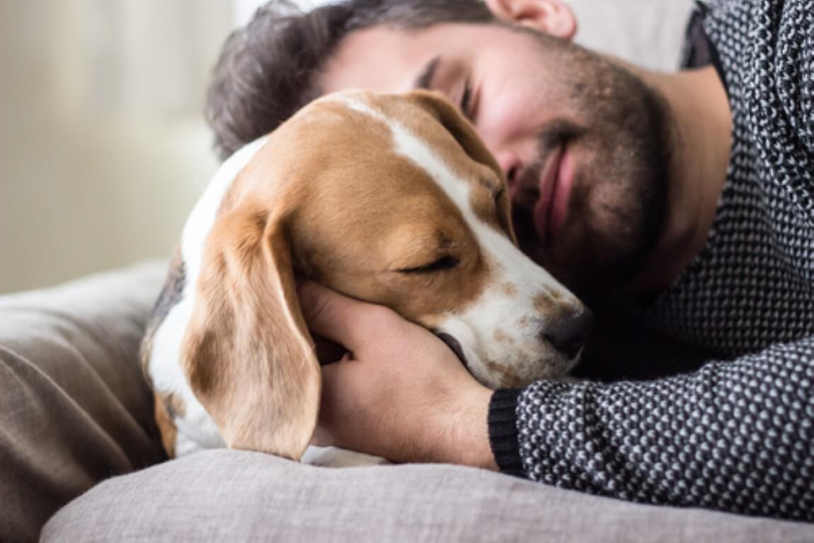 5 דברים שתוכלו לעשות למען הכלב שלכם