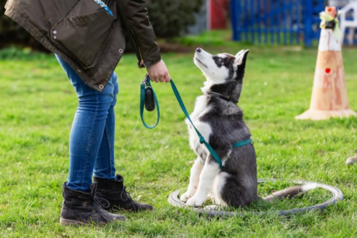 למה כדאי ומה כולל אילוף כלבים?