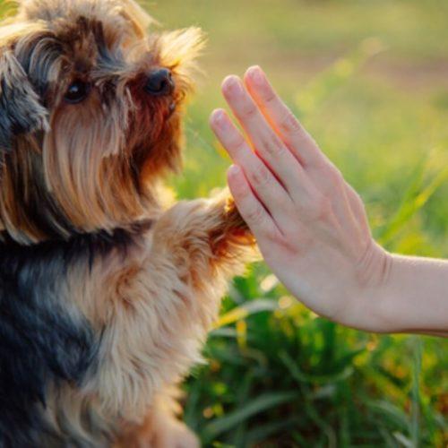 סוגים שונים של אילוף כלבים