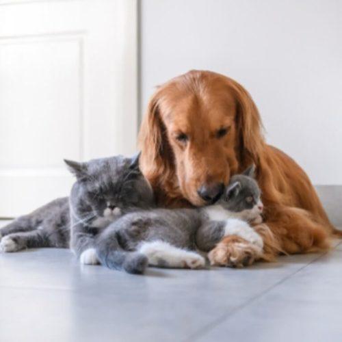 איך להכין את הבית לקראת אימוץ של כלב חדש