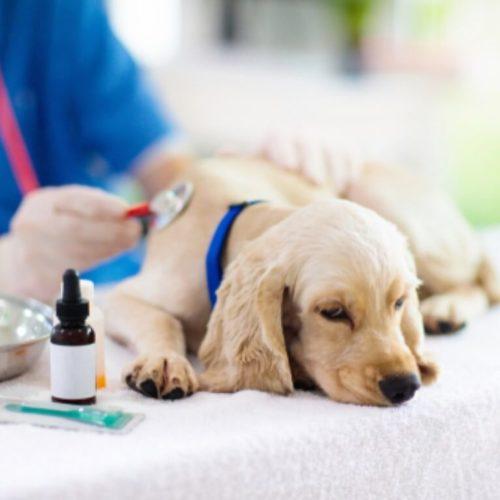 סוגיות רפואיות חשובות בטיפול בכלבים בבית