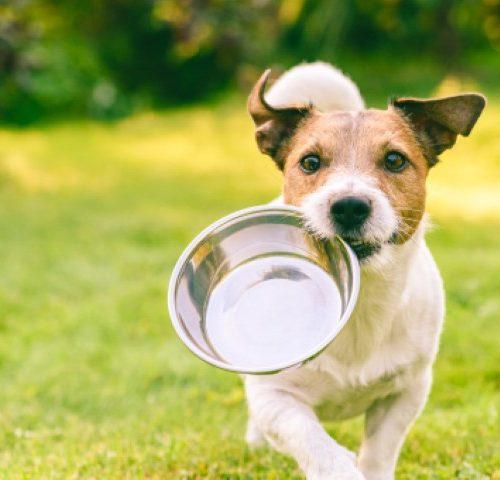 חשיבות אילוף כלבים והמזון שהם אוכלים